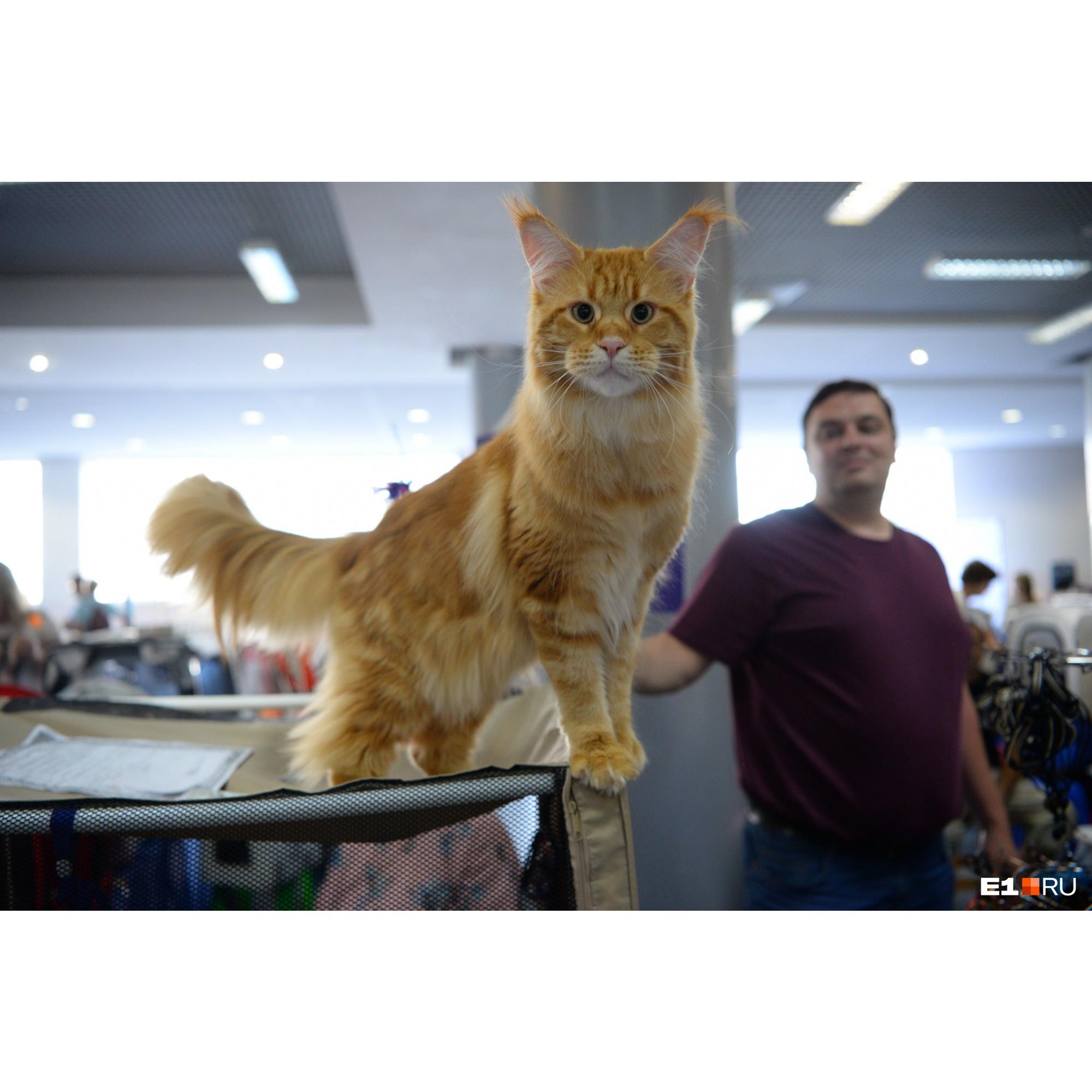 Все котики до неприличия фотогеничны