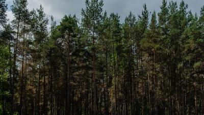 Следователи просят пермяков помочь найти преступника, напавшего на мужчину в Балатовском парке