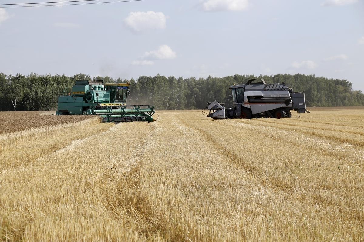 Урожайность зерновых составляет 17,1 центнера с гектара