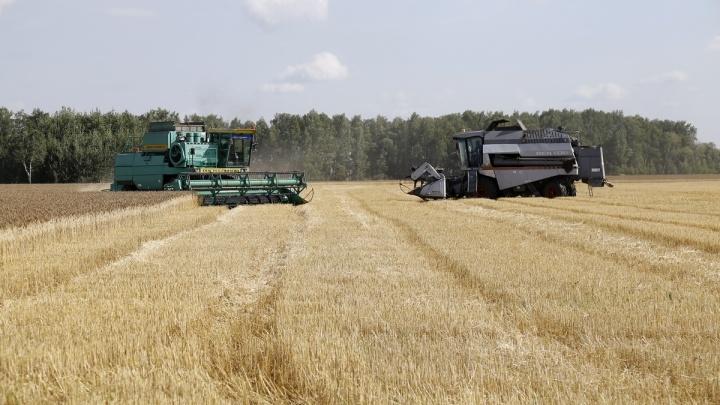 Аграрии Зауралья убрали более 95% от запланированных площадей зерновых и зернобобовых культур