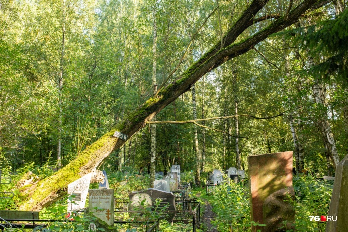 """Еще больше репортажей с кладбищ Ярославля вы найдете, <a href=""""https://76.ru/text/theme/14215/"""" target=""""_blank"""" class=""""_"""">перейдя по этой ссылке</a>&nbsp;"""