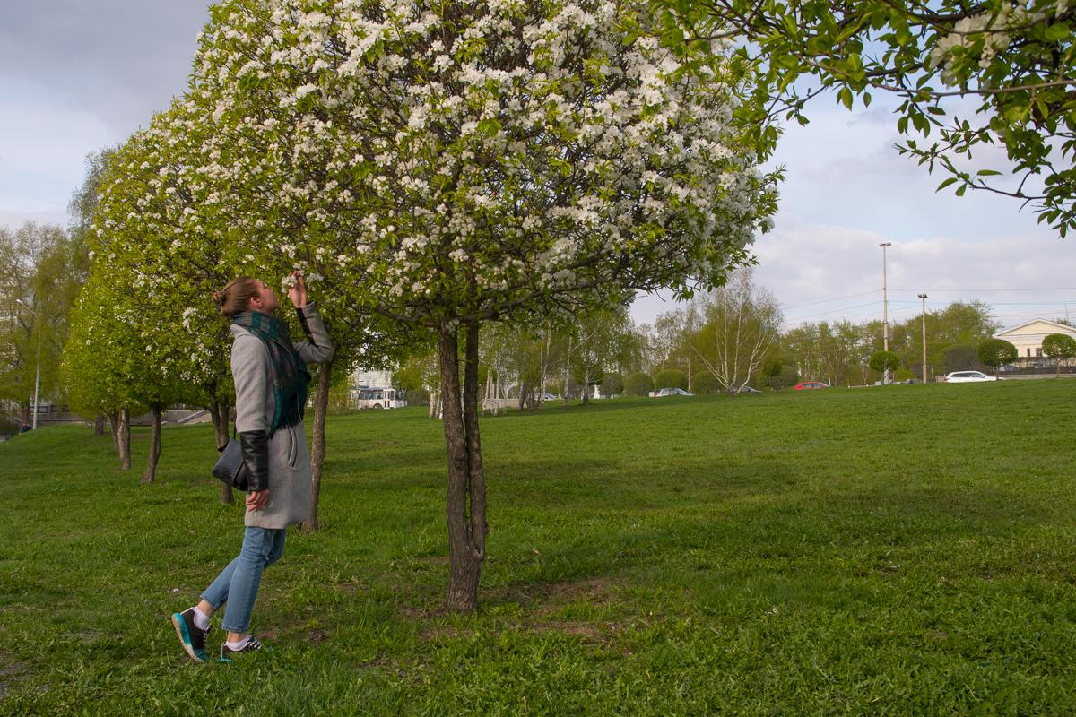 Яблони вовсю цветут, но садоводы переживают, что опылять их в такой холод некому