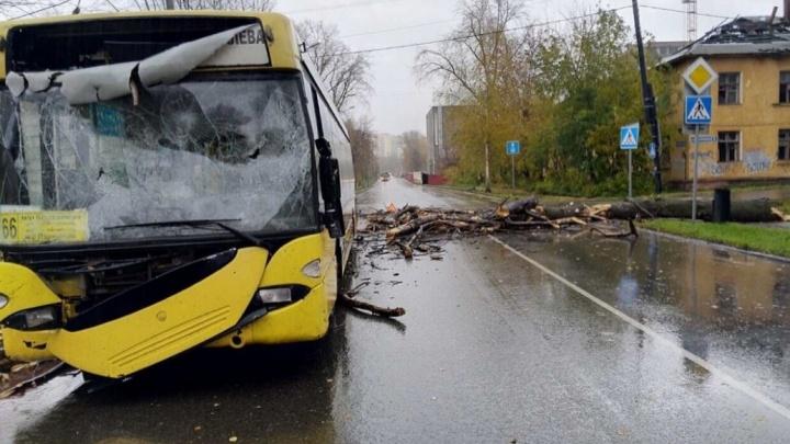 Перевозчик автобуса, на который упало дерево, потребовал от администрации 750 тысяч