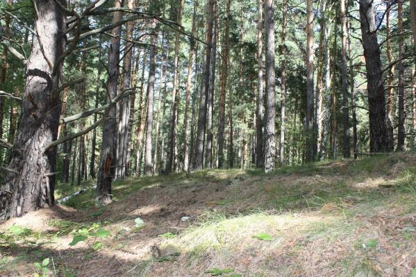 Леса запретили посещать из-за жаркой и сухой погоды