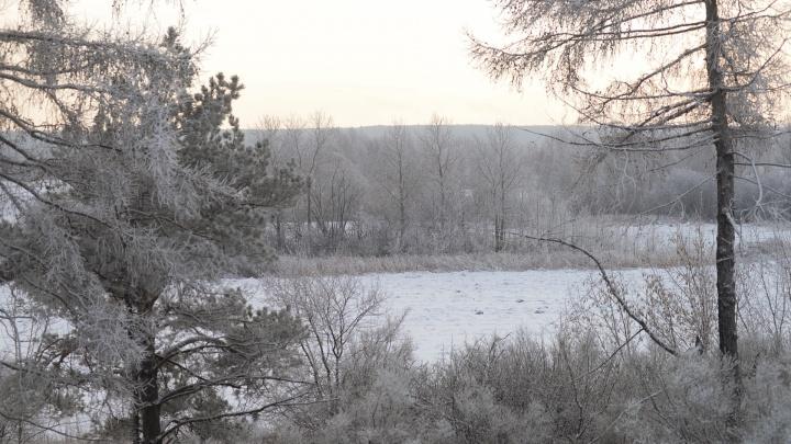 Департамент лесного хозяйства снизил цены на ёлки, которые можно срубить на Урале