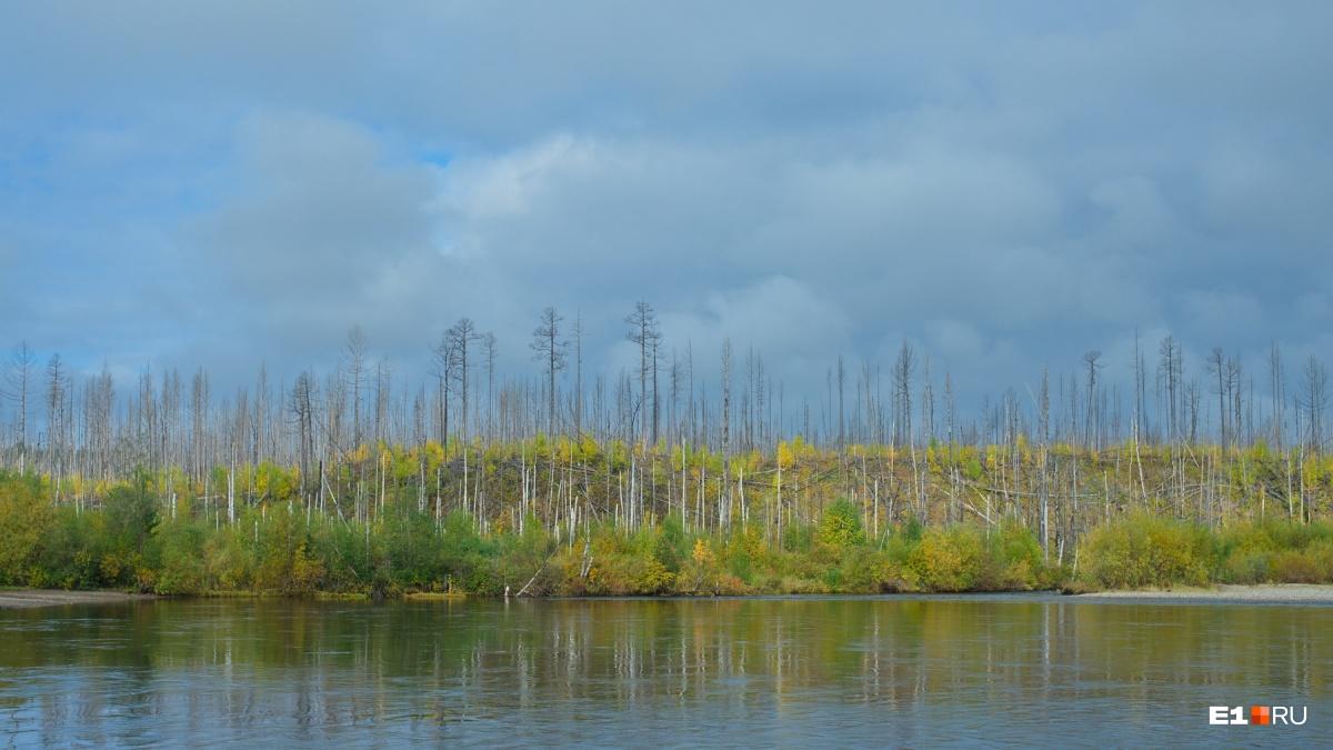 В Вижае хорошо видны последствия пожара — лес редкий