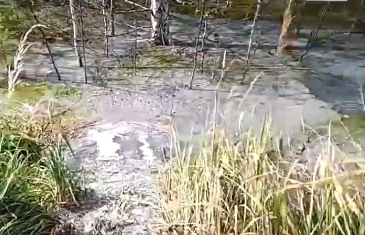 Кто виноват в появлении болота, пока неизвестно