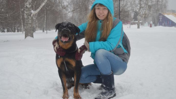 Ротвейлер-донор из Перми помогает собакам с онкологией