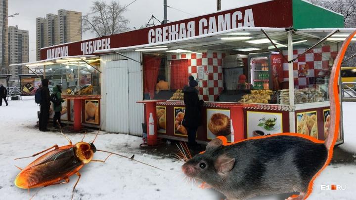 «Повсюду тараканы и мыши»: узбечка сняла на видео, в каких условиях готовят самсу в Екатеринбурге