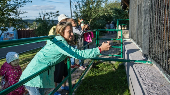 Директор зоопарка Красноярска назвал три причины отказа от покупки слона