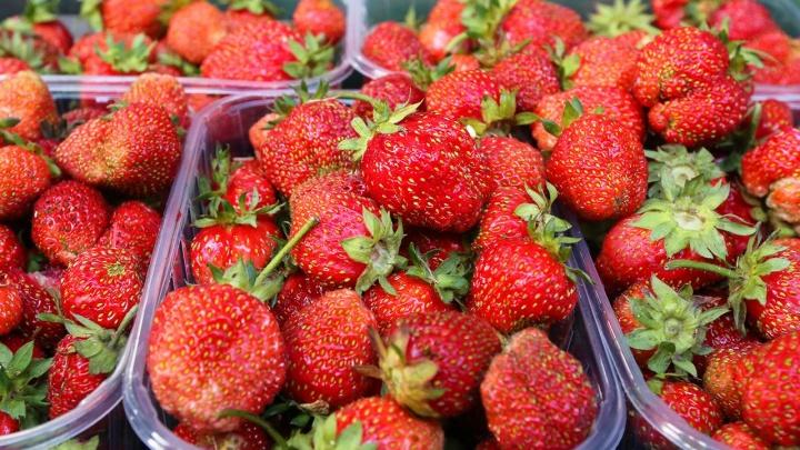 В Уфе пройдет ягодная ярмарка