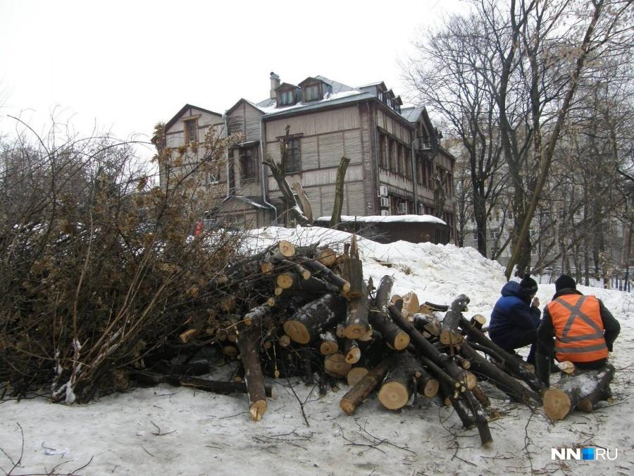 Даже здоровые многолетние деревья идут под топор ради строительства элитного жилья