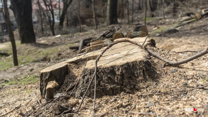 На ЗЖМ в Ростове спилят десятки аварийных деревьев