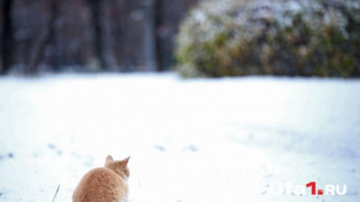 В Башкирии прогнозируют снегопады и метели