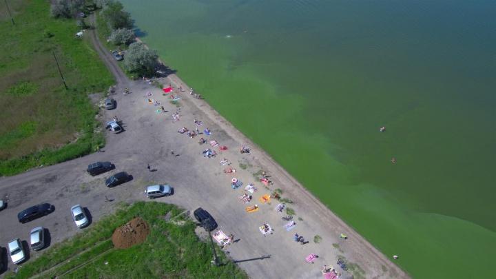 Рыба задыхается и погибает: в Челябинске зацвело Первое озеро