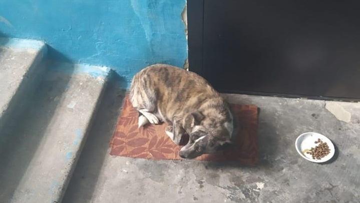 Как Хатико: в Волгограде ищут дом собаке, оставшейся без любимых хозяев
