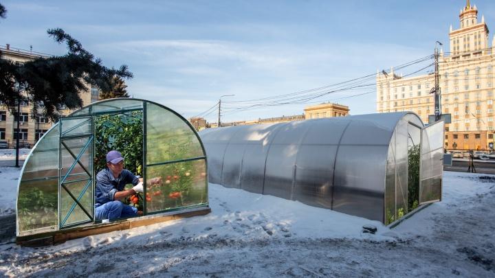 Новый рынок или спа-салон: теплицы в сквере напротив ЮУрГУ удивили челябинцев