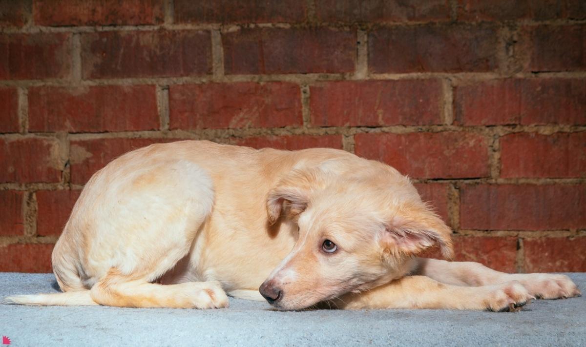 У этого щенка ещё нет имени. Это девочка, и ей 5 месяцев