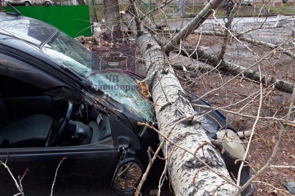 Тополь повредил кузов авто