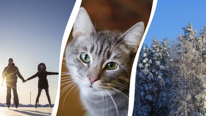 Кафе с котиками или сцена из «Привидения»? Семь способов удивить любимых 14 февраля в Архангельске