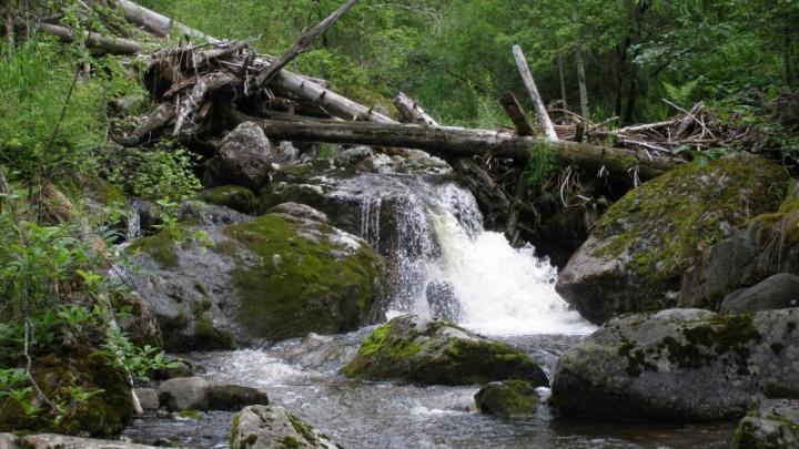 Загрязнителя природного парка вычислили по оставленным среди отходов квитанциям