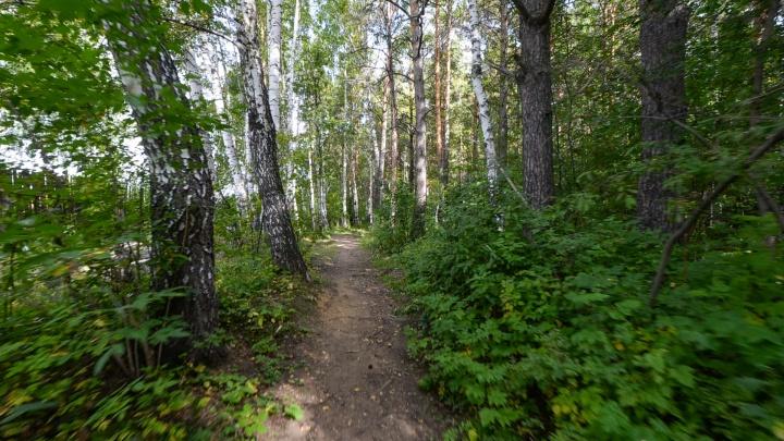 В Екатеринбурге предложили «подвинуть» охраняемый лесопарк ради скважины для отеля Ramada