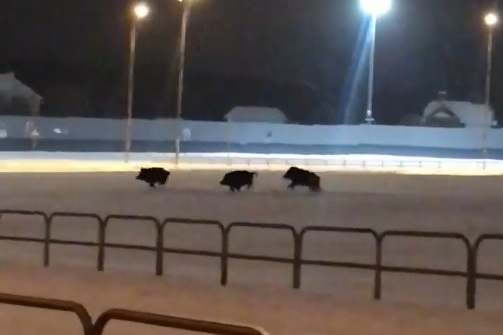 Животные резвились на снегу