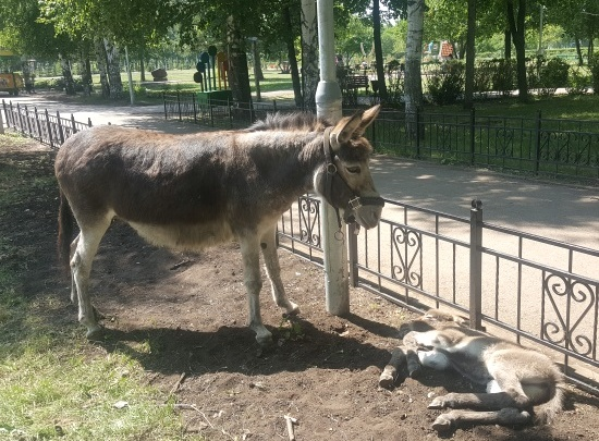 Плюшевый Тимоша: в одном из городских парков Башкирии появился новый обитатель