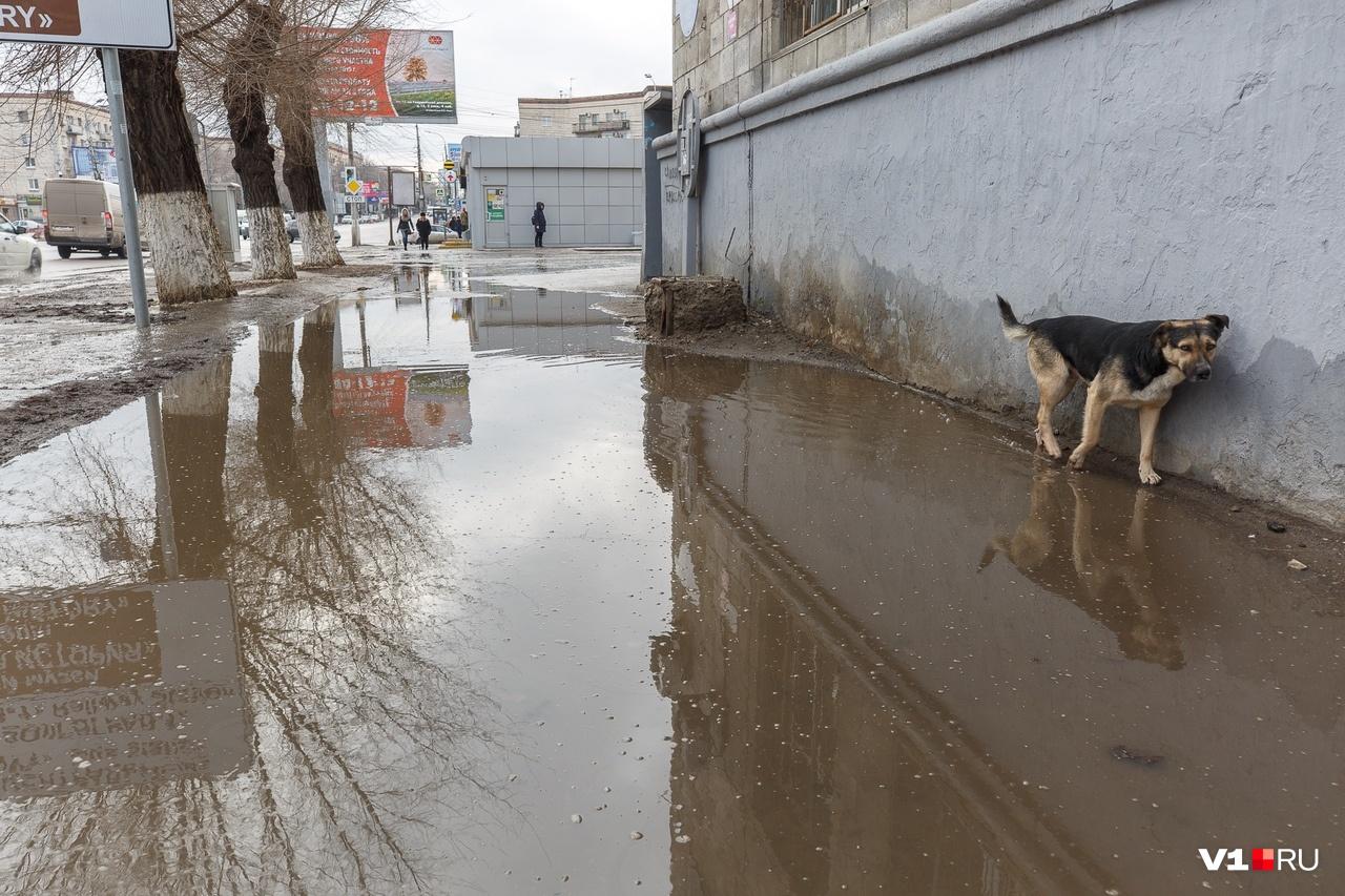 Что говорить о чиновниках, если связываться с лужей не рискуют даже уличные псы