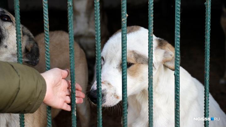 Омский врач закупила для бездомных собак партию корма на 15 тысяч рублей