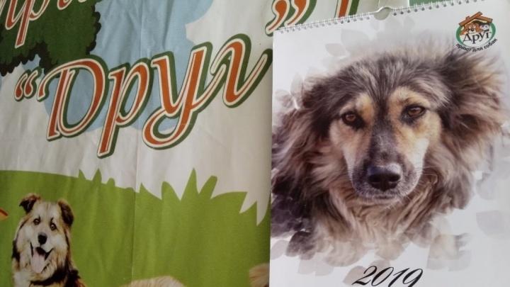 Каждому месяцу своя история: омский приют «Друг» напечатал календарь со слепой и трёхлапой собаками