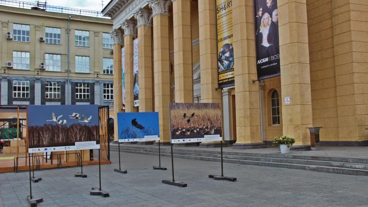 На улице Ленина расставили фотографии исчезающей новосибирской природы