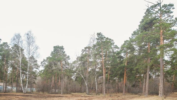 Директора уволили, семерых наказали за рубку и свалку в памятнике природы «Кировский бор»