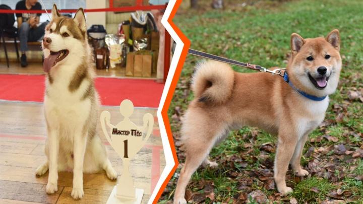 Выставка хороших мальчиков: в Екатеринбург свезли собак со всей страны