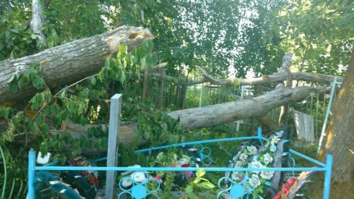 В Башкирии сильным ветром повалило деревья на кладбище