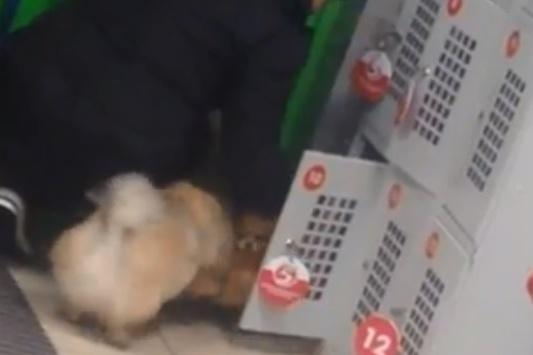 Кадры сняли покупатели супермаркета
