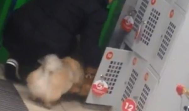 Засунула трёх собак в камеру хранения. В Ярославской области обсуждают скандальное видео