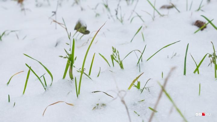 Синоптики рассказали, когда в Перми выпадет первый снег