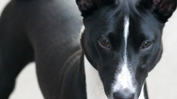 В саду Миндовского сделали запрещающие выгул собак таблички. Их хотят заменить на рекомендательные