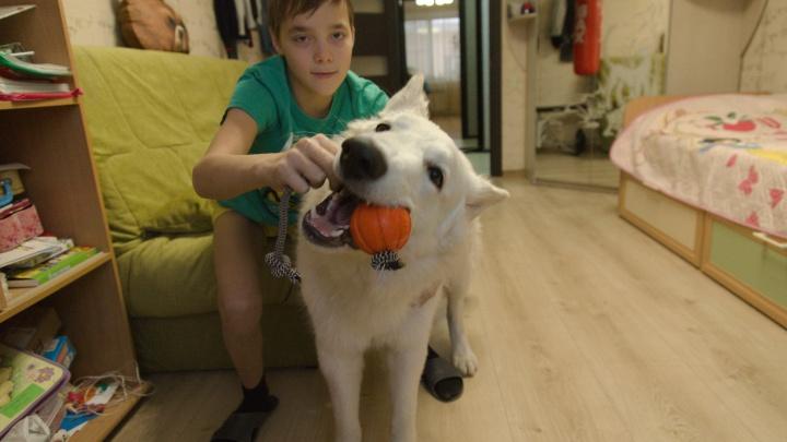 В Ярославле семья научила петь собаку Путина: видео