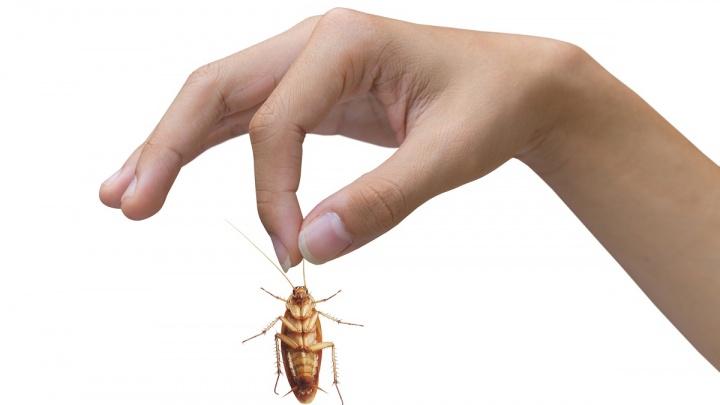 Как быстро и без лишних трудностей избавиться от тараканов