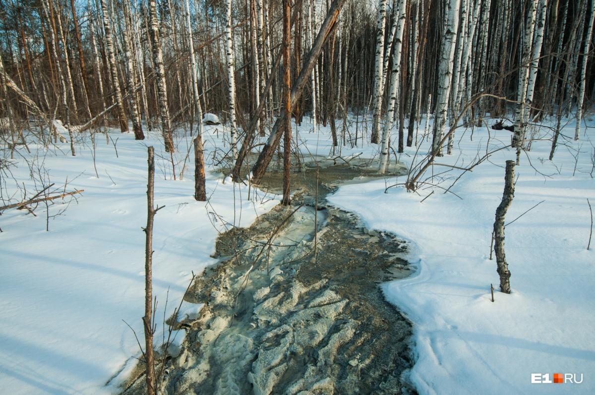 В лесу разлились цементные реки