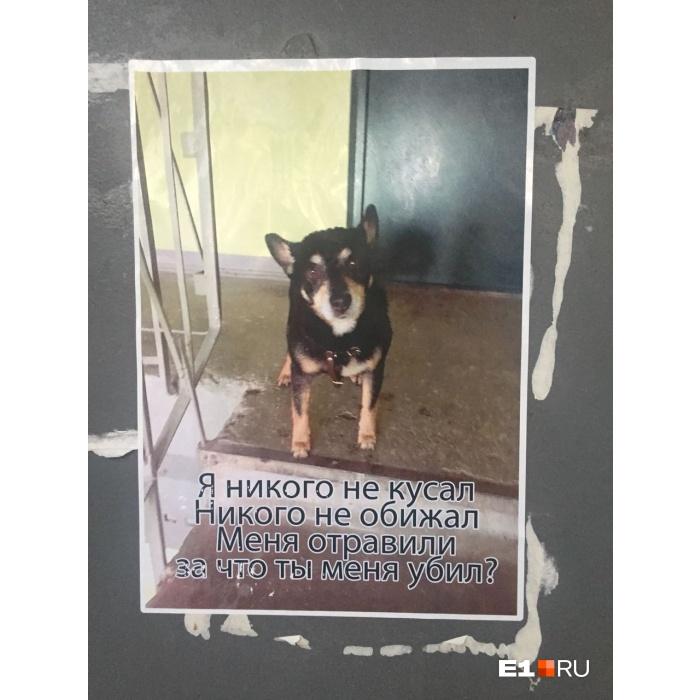 Владелица погибшего от отравления тойтерьера не понимает, за что убили именно ее пса