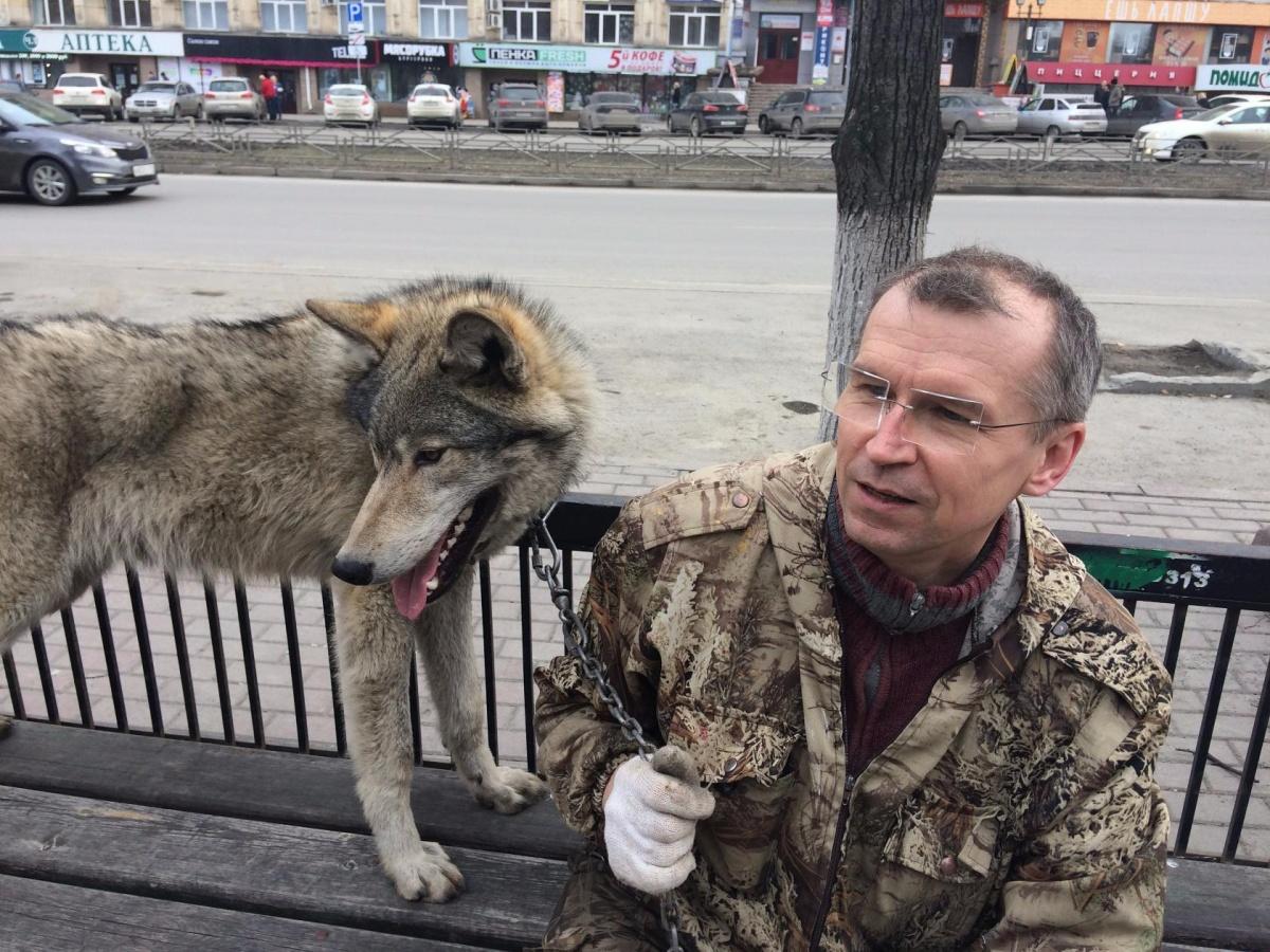 Сергей Панасенко часто выгуливает волка, енотов и лисицу