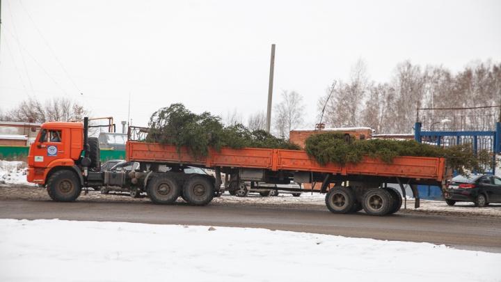 На юге области срубят 423 хвойных дерева, чтобы украсить Тюмень и районы к Новому году