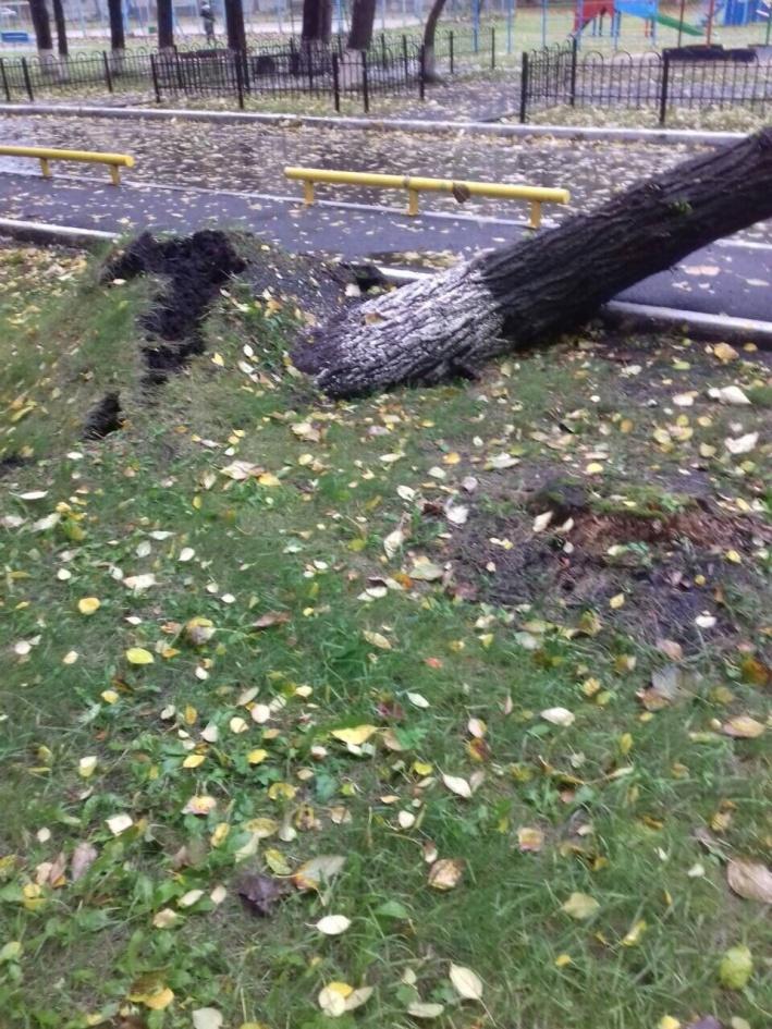 Большие деревья сносило и даже вырывало с корнями. В такую непогоду лучше не ставить под деревьями машины и не ходить около них. Это может быть опасно