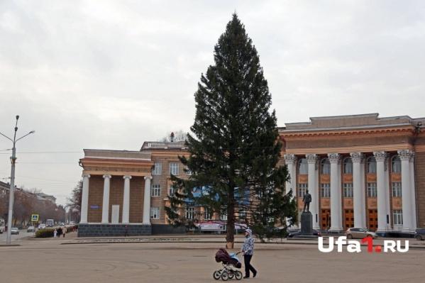 Лесную красавицу высотой 25 метров установили в Черниковке