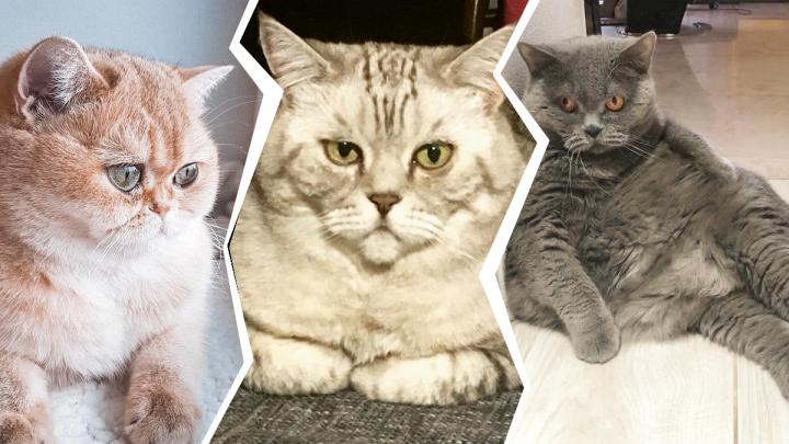 Я/мы толстый кот:10 нижегородских мурлык, которых тоже могли бы не пустить в самолёт