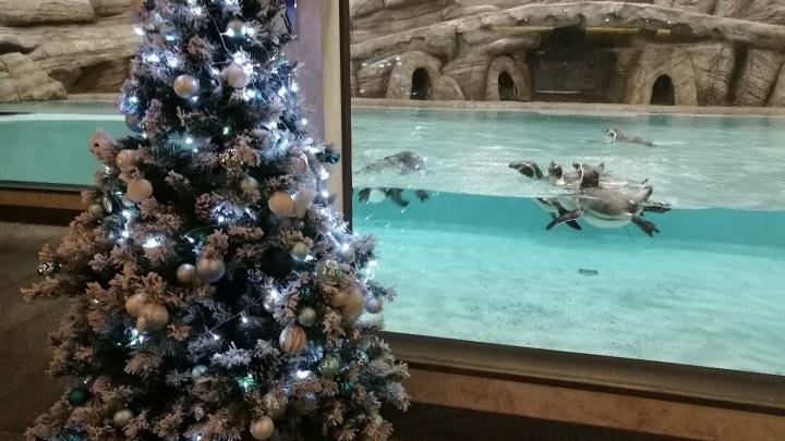 Детям — горка, пингвинам — ёлка: Новосибирский зоопарк украсили к Новому году