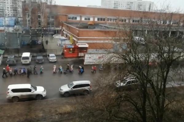 Толпу малышей провели по дороге, где ездят машины